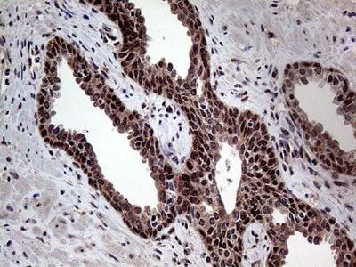 Immunohistochemistry (Formalin/PFA-fixed paraffin-embedded sections) - Anti-GCH1 antibody [OTI5A1] (ab236387)