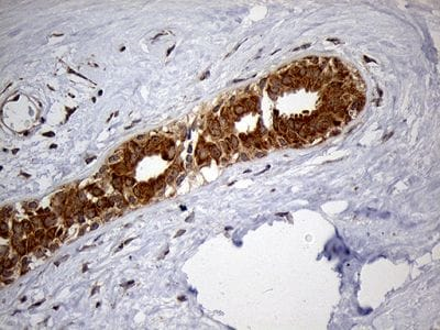 Immunohistochemistry (Formalin/PFA-fixed paraffin-embedded sections) - Anti-HDHD3 antibody [OTI1C5] (ab236389)