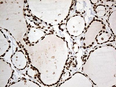 Immunohistochemistry (Formalin/PFA-fixed paraffin-embedded sections) - Anti-IRF2BP1 antibody [OTI3A6] (ab236392)
