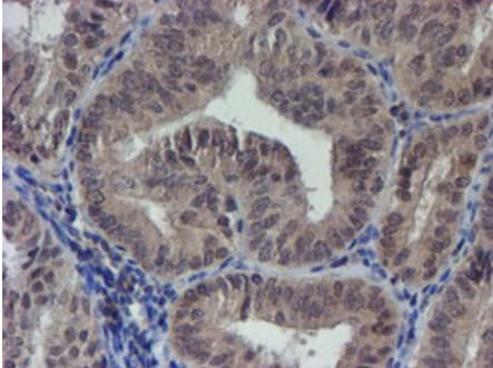 Immunohistochemistry (Formalin/PFA-fixed paraffin-embedded sections) - Anti-LRRC25/MAPA antibody [OTI1D9] (ab236395)