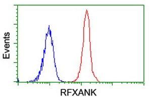 Flow Cytometry - Anti-RFXANK antibody [OTI3E7] (ab236408)