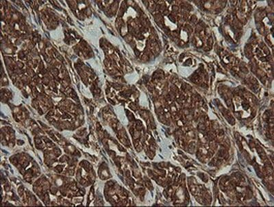 Immunohistochemistry (Formalin/PFA-fixed paraffin-embedded sections) - Anti-ROMO1 antibody [OTI2C12] (ab236409)