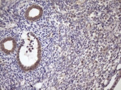 Immunohistochemistry (Formalin/PFA-fixed paraffin-embedded sections) - Anti-SCMH1 antibody [OTI5E6] (ab236411)