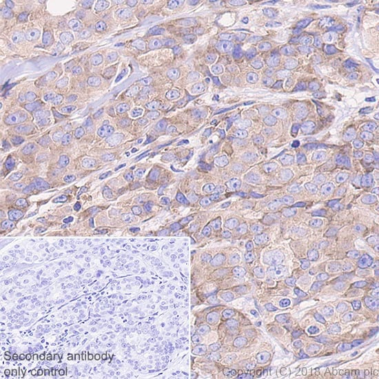 Immunohistochemistry (Formalin/PFA-fixed paraffin-embedded sections) - Anti-RPS6 antibody [EPR22168] - BSA and Azide free (ab236454)