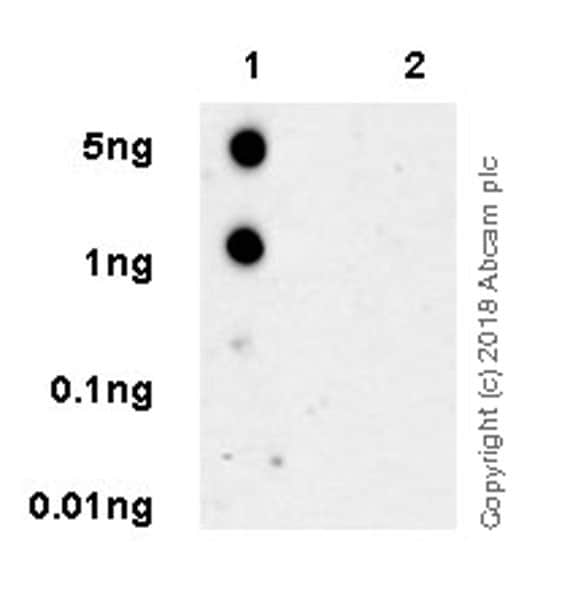 Dot Blot - Anti-Tau (phospho T181) antibody [EPADXR4] - BSA and Azide free (ab236458)