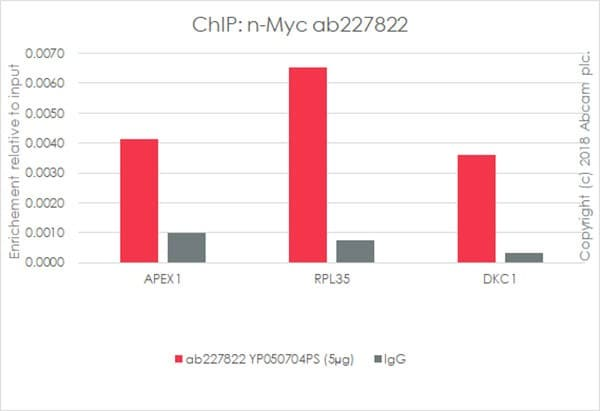 ChIP - Anti-n-Myc/MYCN antibody [EPR18982-8R-3] - BSA and Azide free (ab236459)