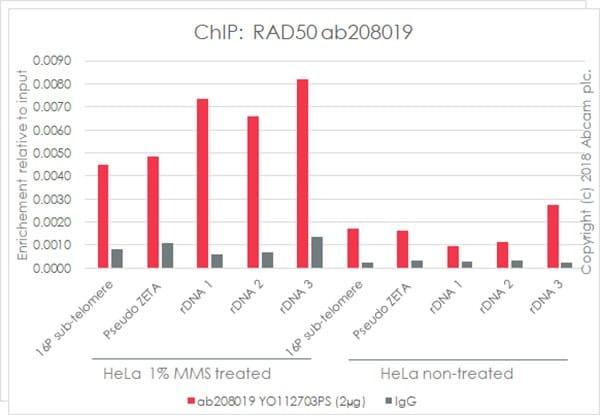 ChIP - Anti-Rad50 antibody [EPR20968] - BSA and Azide free (ab236460)