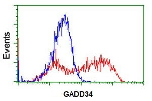 Flow Cytometry - Anti-GADD34 antibody [OTI2B11] (ab236516)