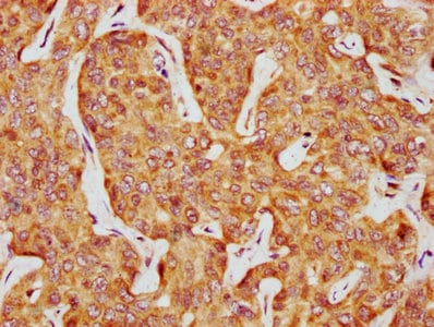Immunohistochemistry (Formalin/PFA-fixed paraffin-embedded sections) - Anti-Casein Kinase 1 delta/CSNK1D antibody (ab236601)