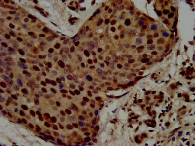 Immunohistochemistry (Formalin/PFA-fixed paraffin-embedded sections) - Anti-RALY antibody (ab236610)