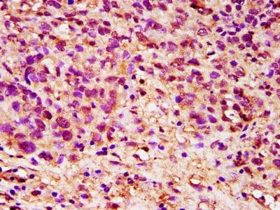 Immunohistochemistry (Formalin/PFA-fixed paraffin-embedded sections) - Anti-Dppa5 antibody (ab236611)