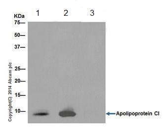 Immunoprecipitation - Anti-Apolipoprotein CI/Apo-CI antibody [EPR16813] - BSA and Azide free (ab236616)