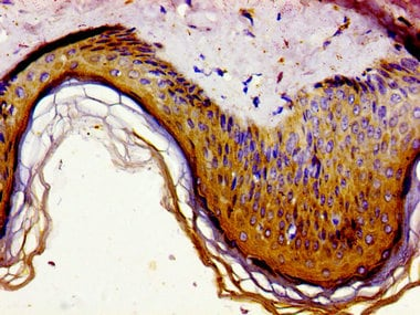 Immunohistochemistry (Formalin/PFA-fixed paraffin-embedded sections) - Anti-Gas1 antibody (ab236618)