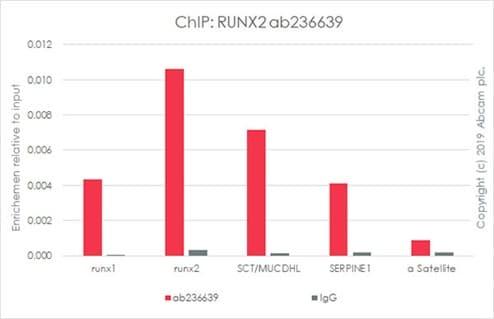 ChIP - Anti-RUNX2 antibody [EPR22858-106] (ab236639)