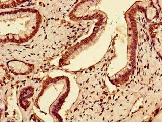Immunohistochemistry (Formalin/PFA-fixed paraffin-embedded sections) - Anti-SLC7A7 antibody (ab236669)