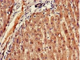 Immunohistochemistry (Formalin/PFA-fixed paraffin-embedded sections) - Anti-FADS1 antibody (ab236672)