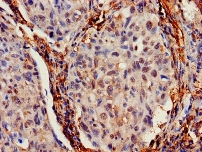 Immunohistochemistry (Formalin/PFA-fixed paraffin-embedded sections) - Anti-IFITM2 antibody (ab236735)