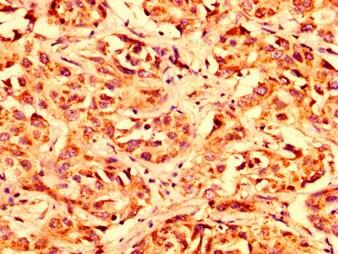 Immunohistochemistry (Formalin/PFA-fixed paraffin-embedded sections) - Anti-LETM1 antibody (ab236743)