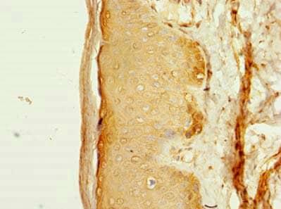 Immunohistochemistry (Formalin/PFA-fixed paraffin-embedded sections) - Anti-FAM118A antibody (ab236792)
