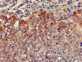 Immunohistochemistry (Formalin/PFA-fixed paraffin-embedded sections) - Anti-VPS29 antibody (ab236796)