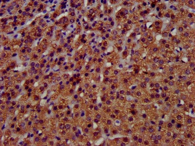 Immunohistochemistry (Formalin/PFA-fixed paraffin-embedded sections) - Anti-TMEM192 antibody (ab236858)