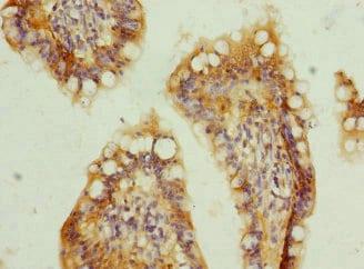 Immunohistochemistry (Formalin/PFA-fixed paraffin-embedded sections) - Anti-TMEM91 antibody (ab236864)