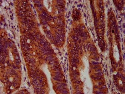 Immunohistochemistry (Formalin/PFA-fixed paraffin-embedded sections) - Anti-SEC14 like protein 2 antibody (ab236888)
