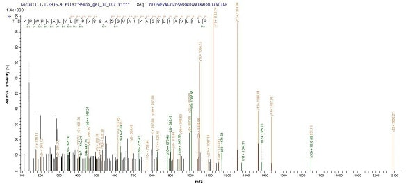 Mass Spectrometry - Recombinant <em>E. coli </em> fimH protein (Tagged) (ab236920)
