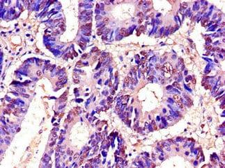 Immunohistochemistry (Formalin/PFA-fixed paraffin-embedded sections) - Anti-C22orf28 antibody (ab236946)