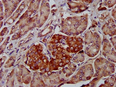 Immunohistochemistry (Formalin/PFA-fixed paraffin-embedded sections) - Anti-MS2 antibody (ab236949)