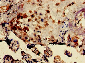 Immunohistochemistry (Formalin/PFA-fixed paraffin-embedded sections) - Anti-DRG1 antibody (ab236958)