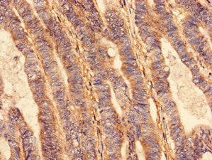 Immunohistochemistry (Formalin/PFA-fixed paraffin-embedded sections) - Anti-VPS26B antibody (ab236966)