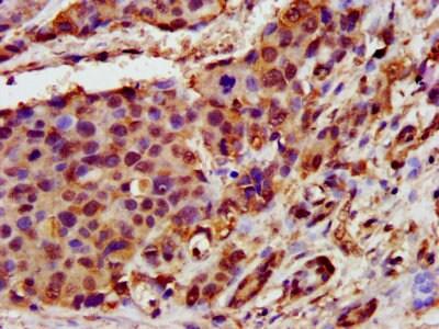 Immunohistochemistry (Formalin/PFA-fixed paraffin-embedded sections) - Anti-MICS1 antibody (ab236967)