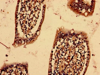 Immunohistochemistry (Formalin/PFA-fixed paraffin-embedded sections) - Anti-YIF1B antibody (ab236973)