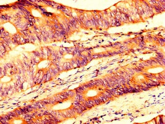 Immunohistochemistry (Formalin/PFA-fixed paraffin-embedded sections) - Anti-USP4 antibody (ab236987)