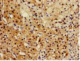 Immunohistochemistry (Formalin/PFA-fixed paraffin-embedded sections) - Anti-SMP30 antibody (ab236995)