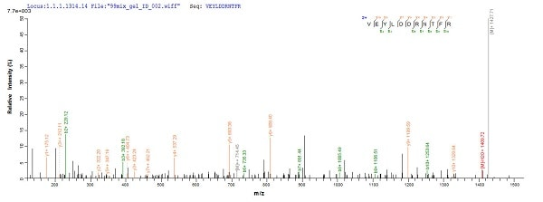 Mass Spectrometry - Recombinant Human p53 protein (ab237007)