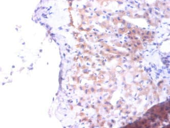 Immunohistochemistry (Formalin/PFA-fixed paraffin-embedded sections) - Anti-PTDSS1 antibody (ab237019)