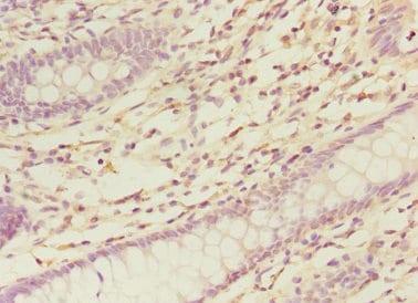 Immunohistochemistry (Formalin/PFA-fixed paraffin-embedded sections) - Anti-NELF-B antibody (ab237027)