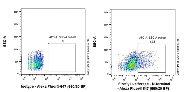 Flow Cytometry - Anti-Firefly Luciferase antibody [EPR17789] (Alexa Fluor® 647) (ab237252)