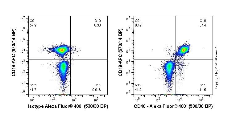 Flow Cytometry - Alexa Fluor® 488 Anti-CD40 antibody [EPR18005-35] (ab237257)