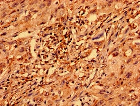 Immunohistochemistry (Formalin/PFA-fixed paraffin-embedded sections) - Anti-ZNF529 antibody (ab237486)