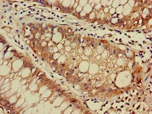 Immunohistochemistry (Formalin/PFA-fixed paraffin-embedded sections) - Anti-DNAJC4 antibody (ab237538)