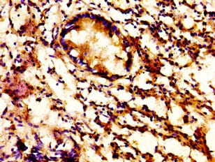 Immunohistochemistry (Formalin/PFA-fixed paraffin-embedded sections) - Anti-ACBD3 antibody (ab237543)