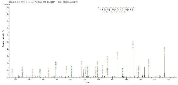 Mass Spectrometry - Recombinant Salmonella typhimurium PrgI protein (His tag) (ab237560)