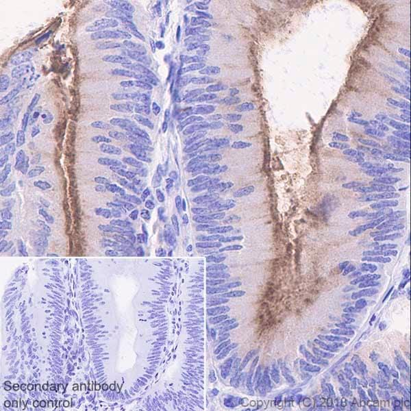 Immunohistochemistry (Formalin/PFA-fixed paraffin-embedded sections) - Anti-MUC13 antibody [EPR21901] - BSA and Azide free (ab237590)