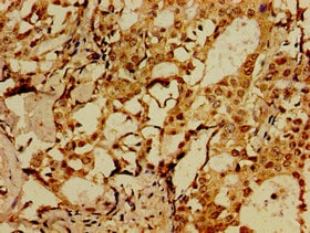 Immunohistochemistry (Formalin/PFA-fixed paraffin-embedded sections) - Anti-SorCS1 antibody (ab237618)