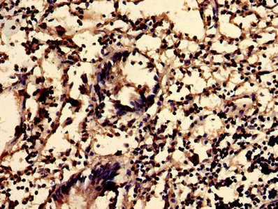 Immunohistochemistry (Formalin/PFA-fixed paraffin-embedded sections) - Anti-Sphingomyelin Synthase 2 antibody (ab237681)