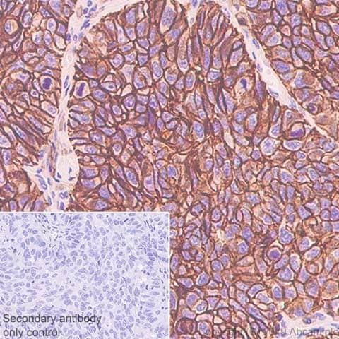 Immunohistochemistry (Formalin/PFA-fixed paraffin-embedded sections) - Anti-SLC1A5/ASCT2 antibody [CAL33] (ab237704)