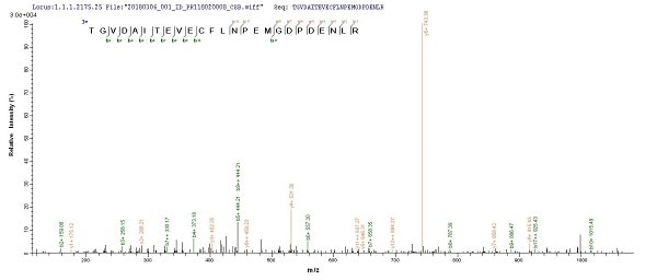 Mass Spectrometry - Recombinant BK polyomavirus, strain AS, Major Capsid VP1 protein (Tagged) (ab237745)